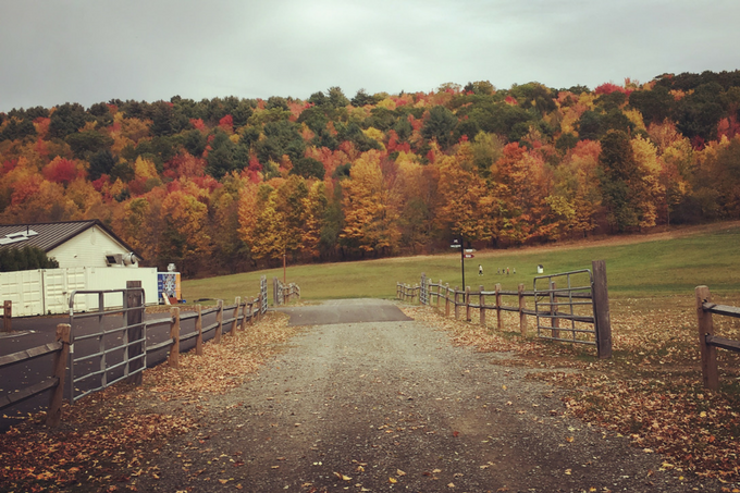 Fall In Upstate New York My Farmhouse Table Travels Niagara Falls Apple Orchard Buffalo