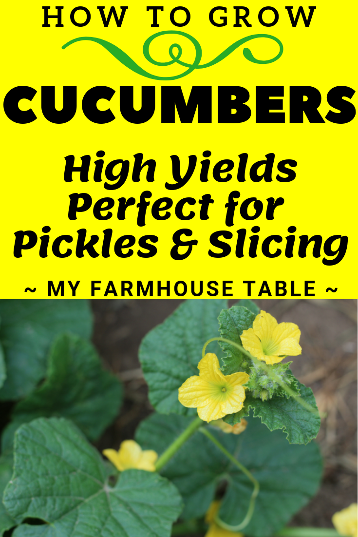 How to Grow Cucumbers Vertically From Seed for High Yields Perfect for Pickles and Slicing Tips to Grow Cucumbers On a Trelis My Farmhouse Table